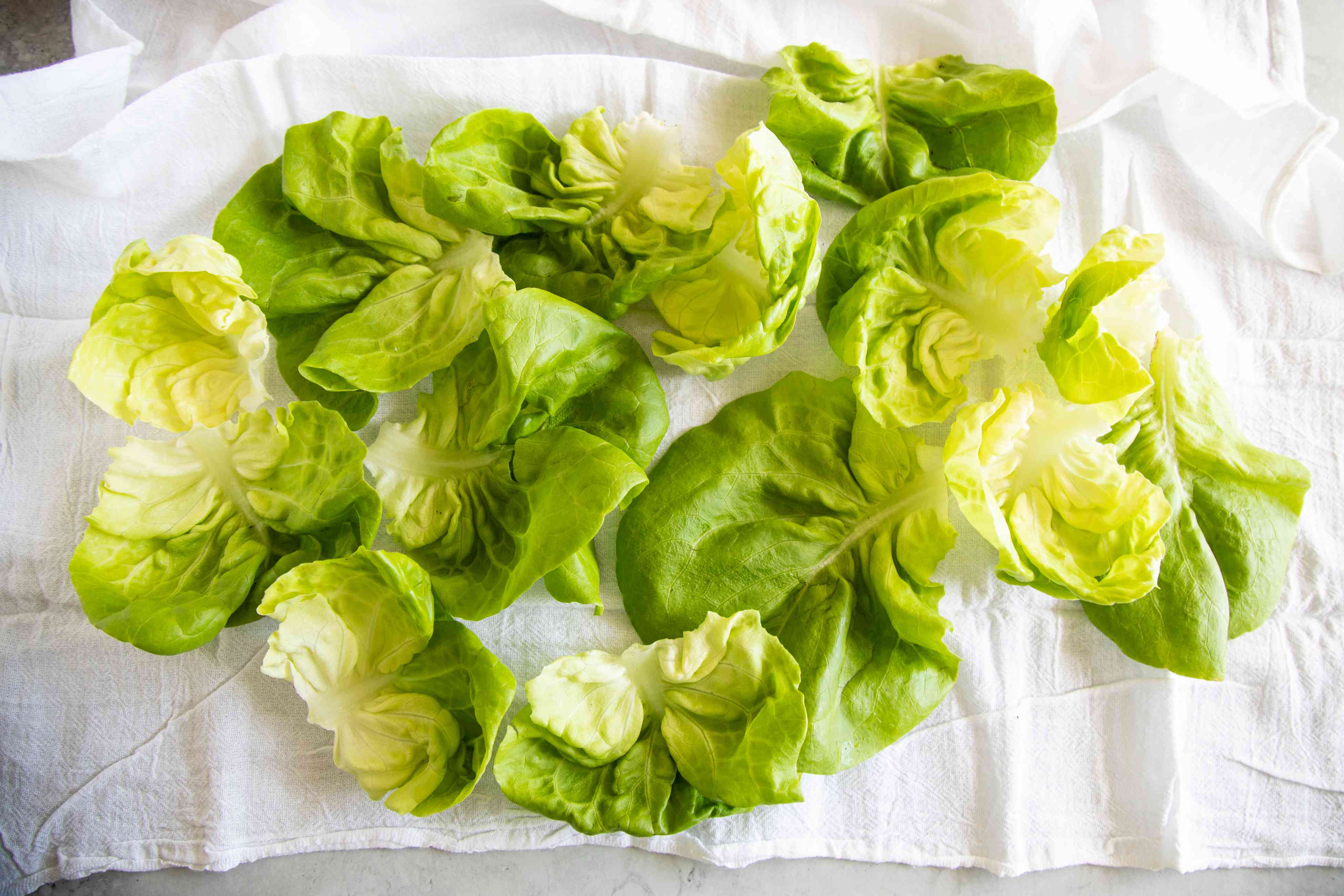 Lettuce leaves laid out on a white flour sack towel