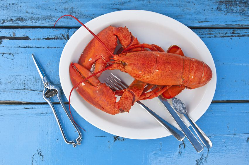 Canada, Peggy's Cove, Nova Scotia, Freshly cooked lobster