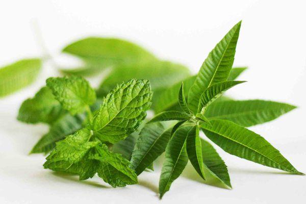 Lemon Verbena Mint Tea