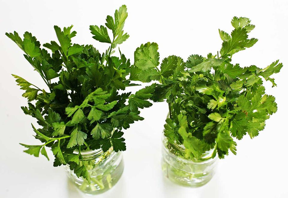 how to store parsley and fresh herbs