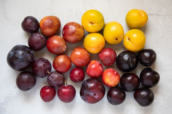 Varieties and colors of plums