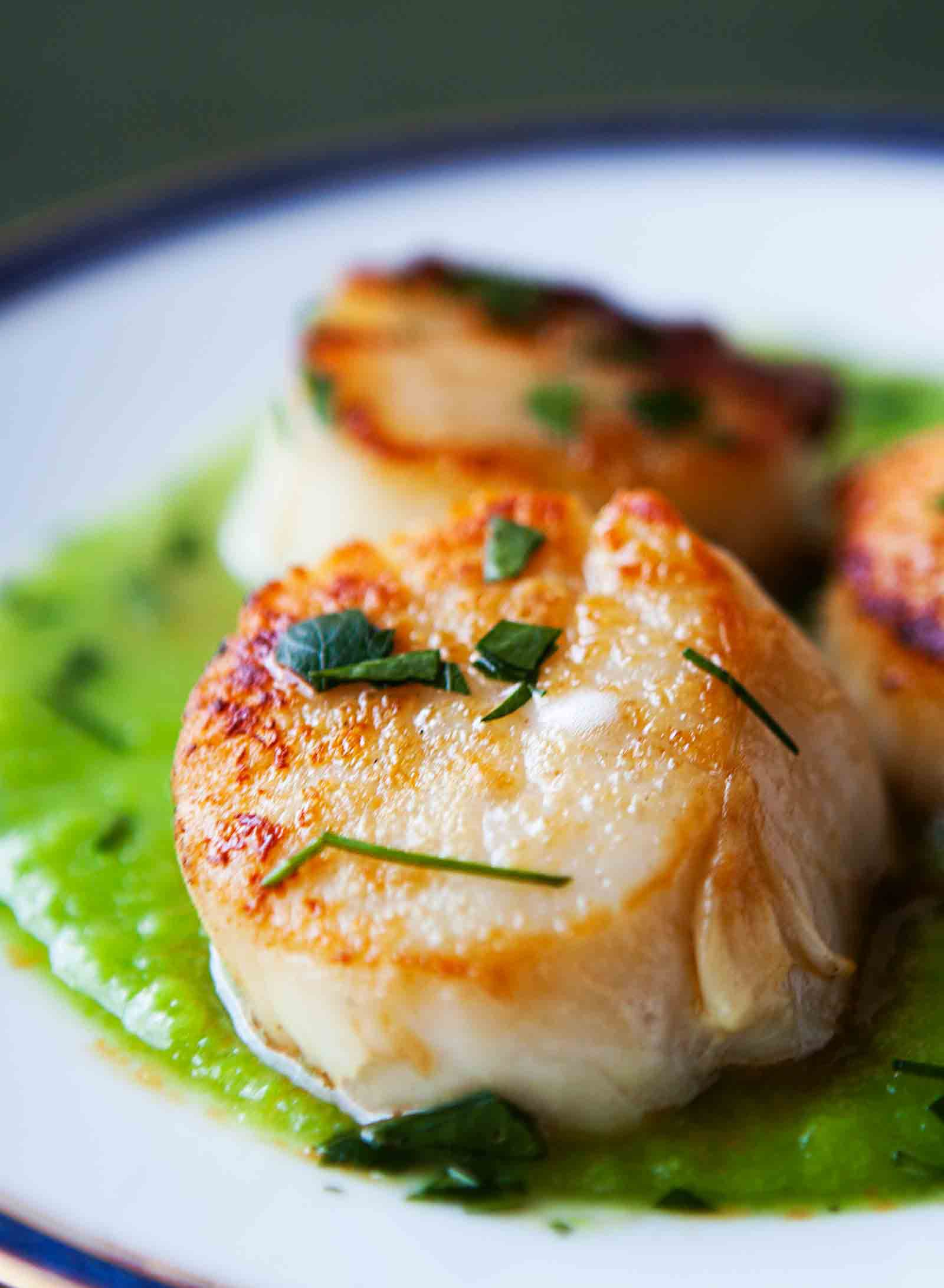 Seared Scallops with Asparagus Sauce