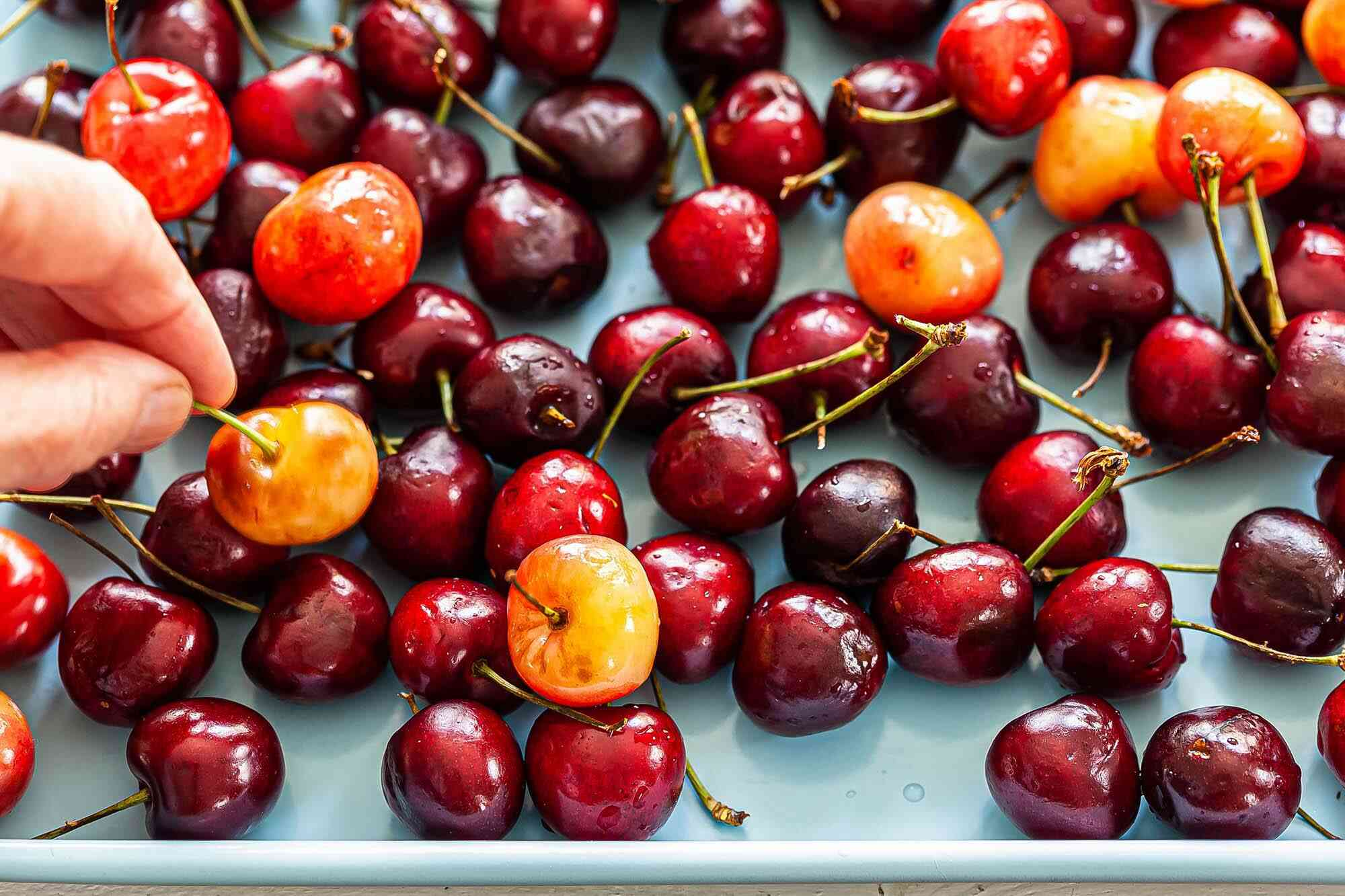 How to choose cherries with a variety of cherries on a tray and a hand picking one up.