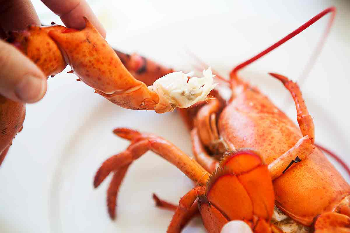 Pull the claw leg away from the lobster body