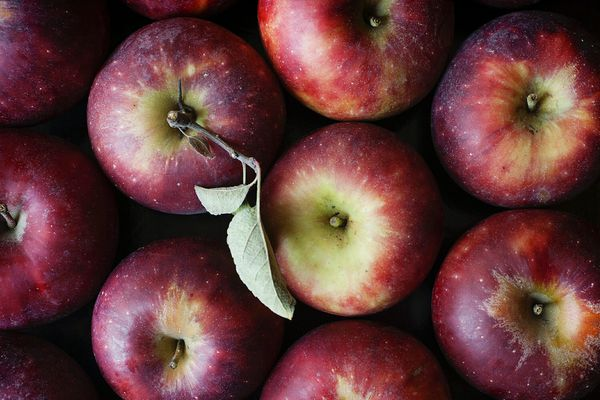 Overhead view of apples on a black background for the best apples for fall baking.