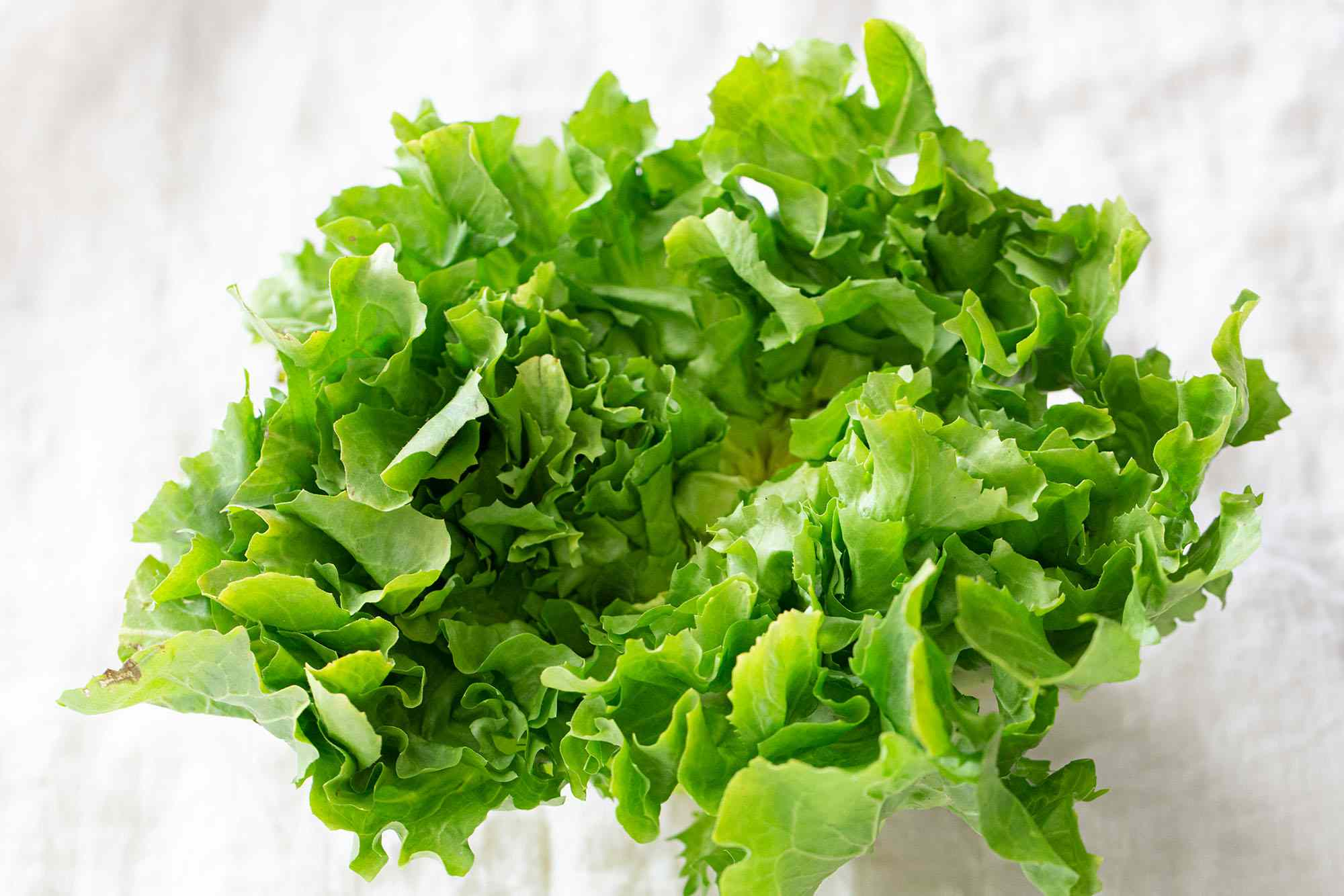 Fresh escarole lettuce on a white background.