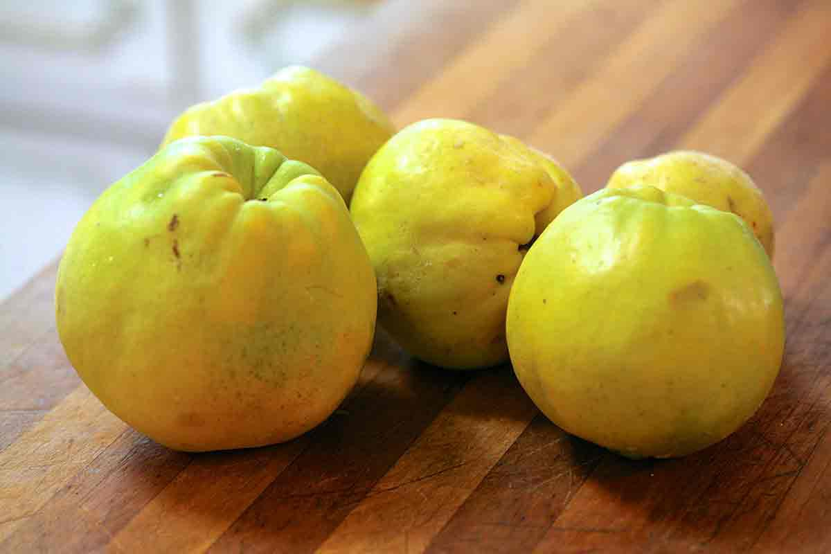 fresh quince fruit
