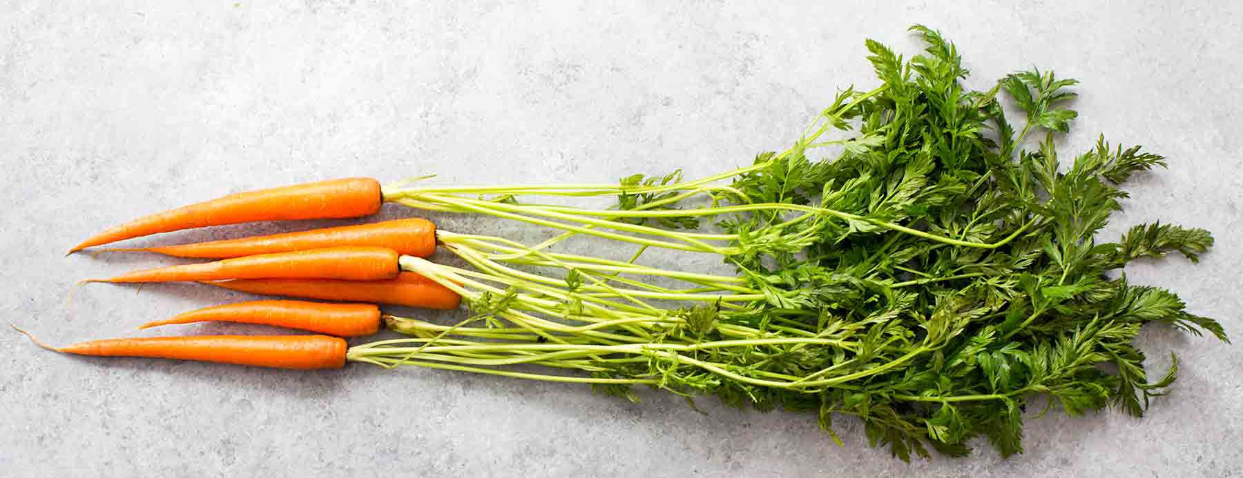 Fresh Young Carrots with carrot tops carrot greens