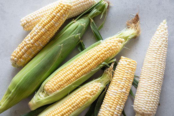Varieties of summer corn