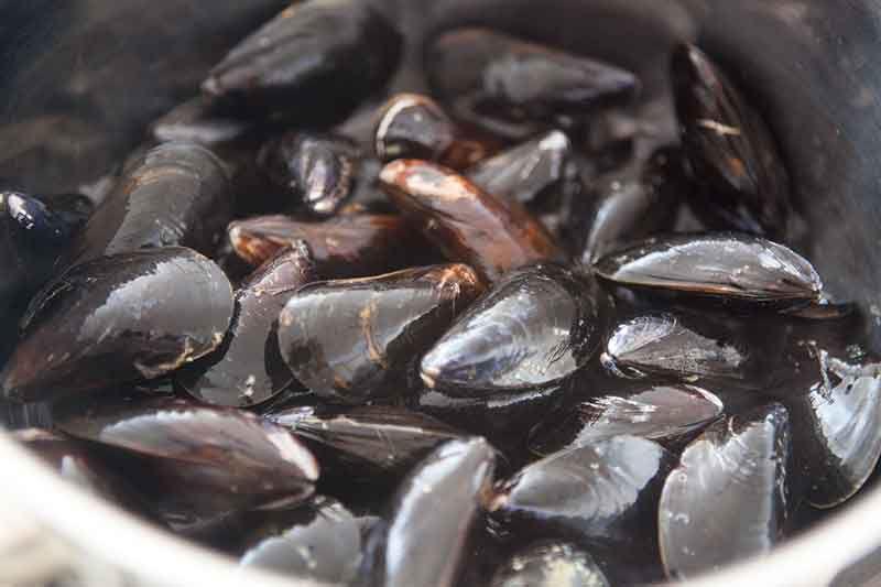 mussels-white-wine-sauce-method-1