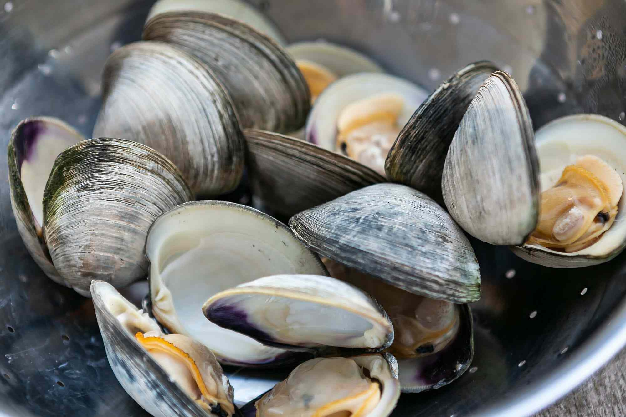 Cooked clams in a colander for everything you need to know about clams.