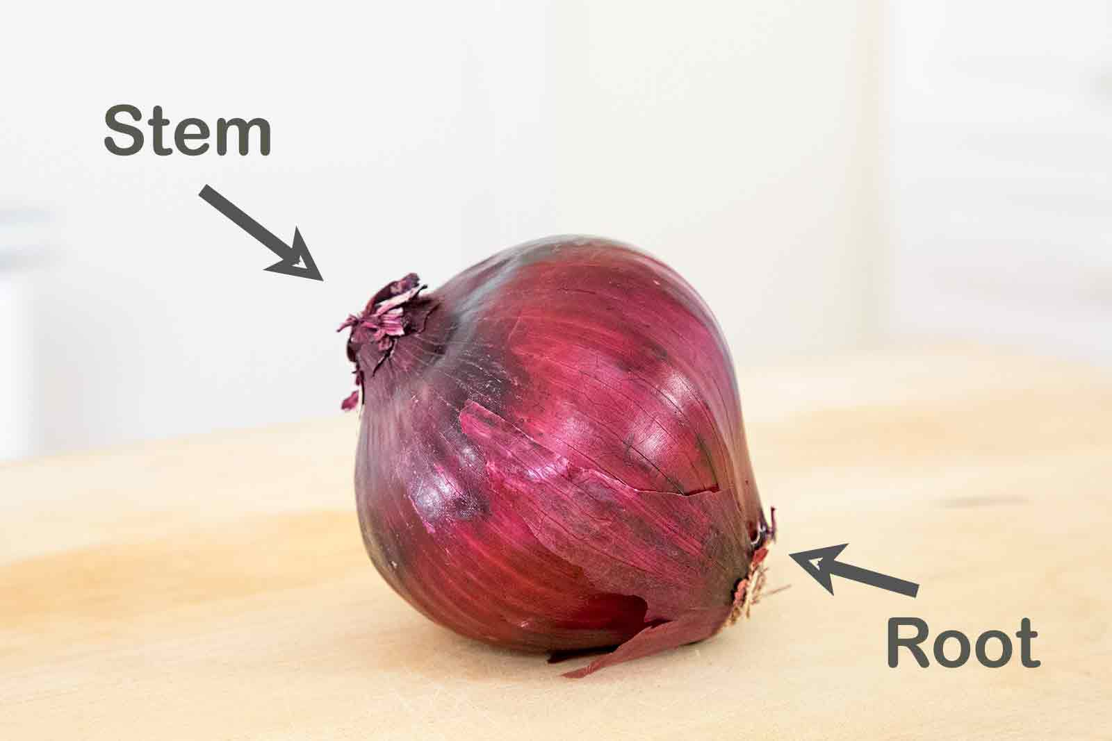 Onion stem end and root end