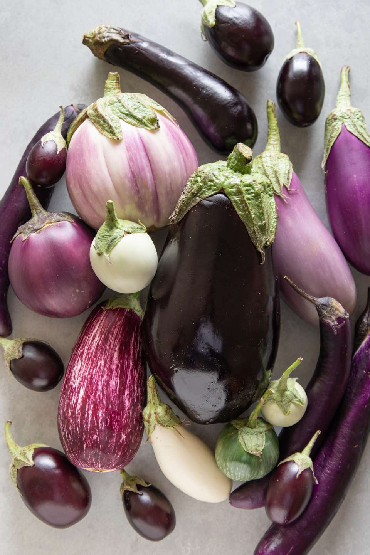All the varieties of purple eggplant