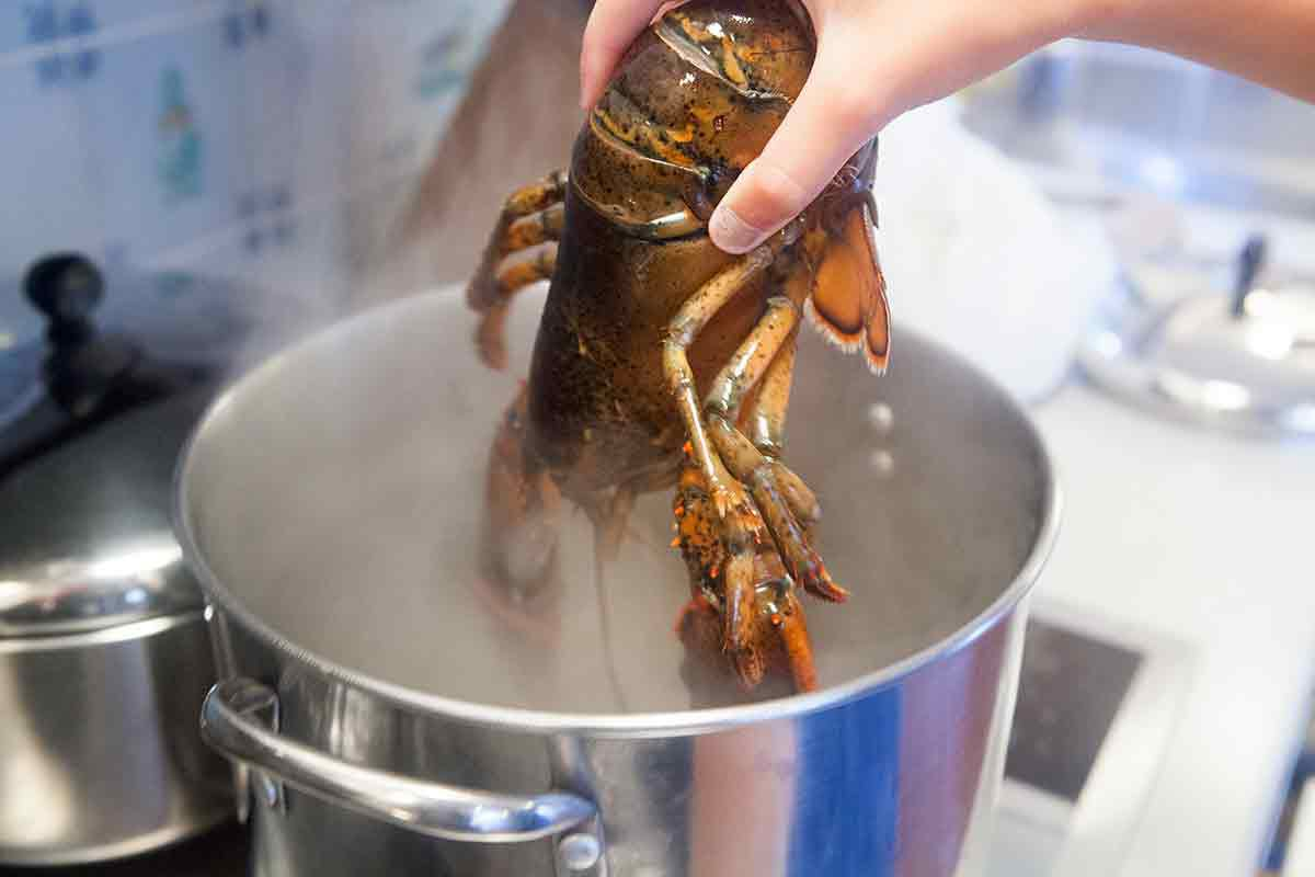 Put the lobster head first into boiling salted water