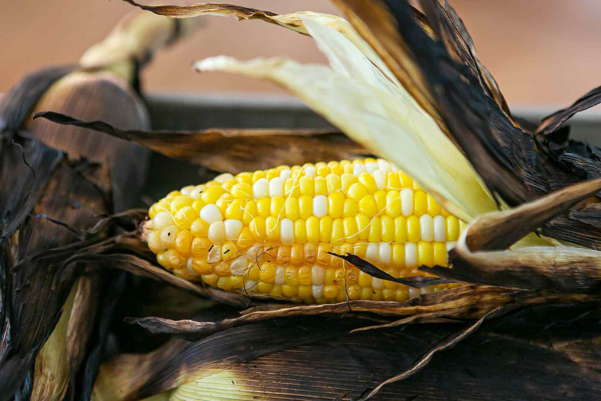 Corn on the cob with husks blackened after being grilled