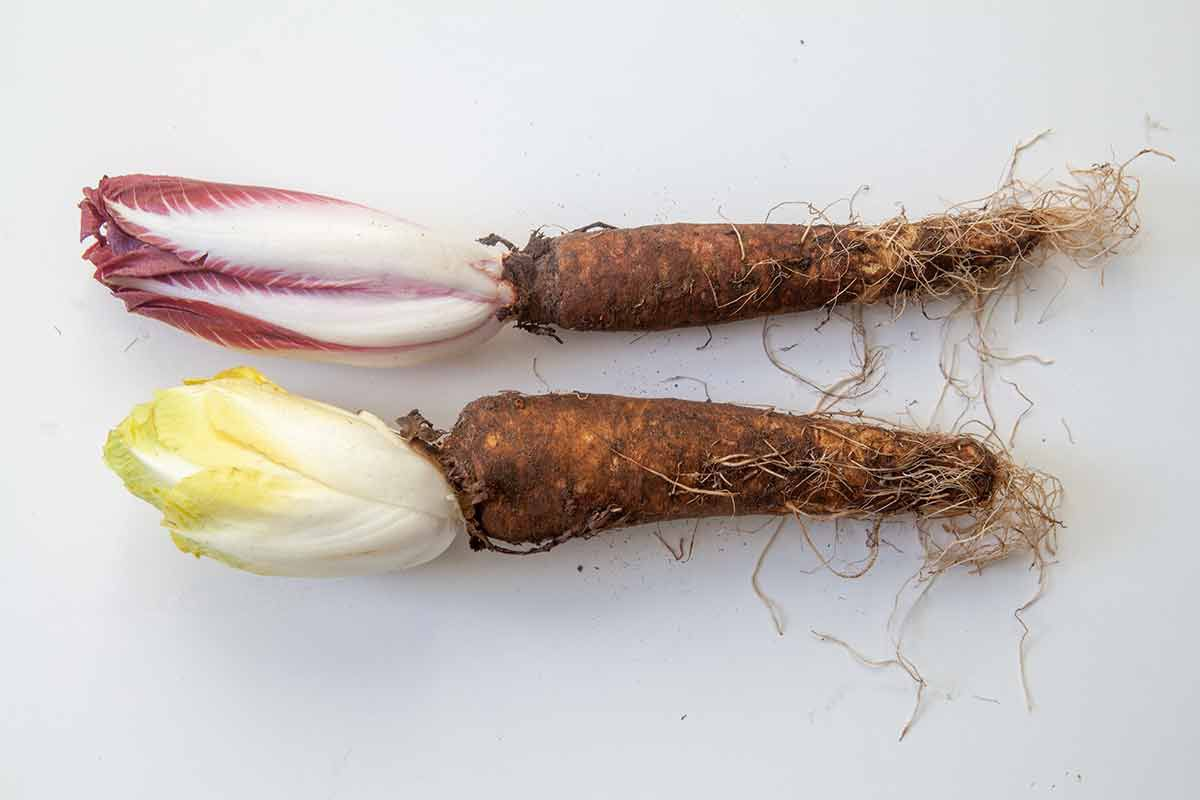 endive on their roots