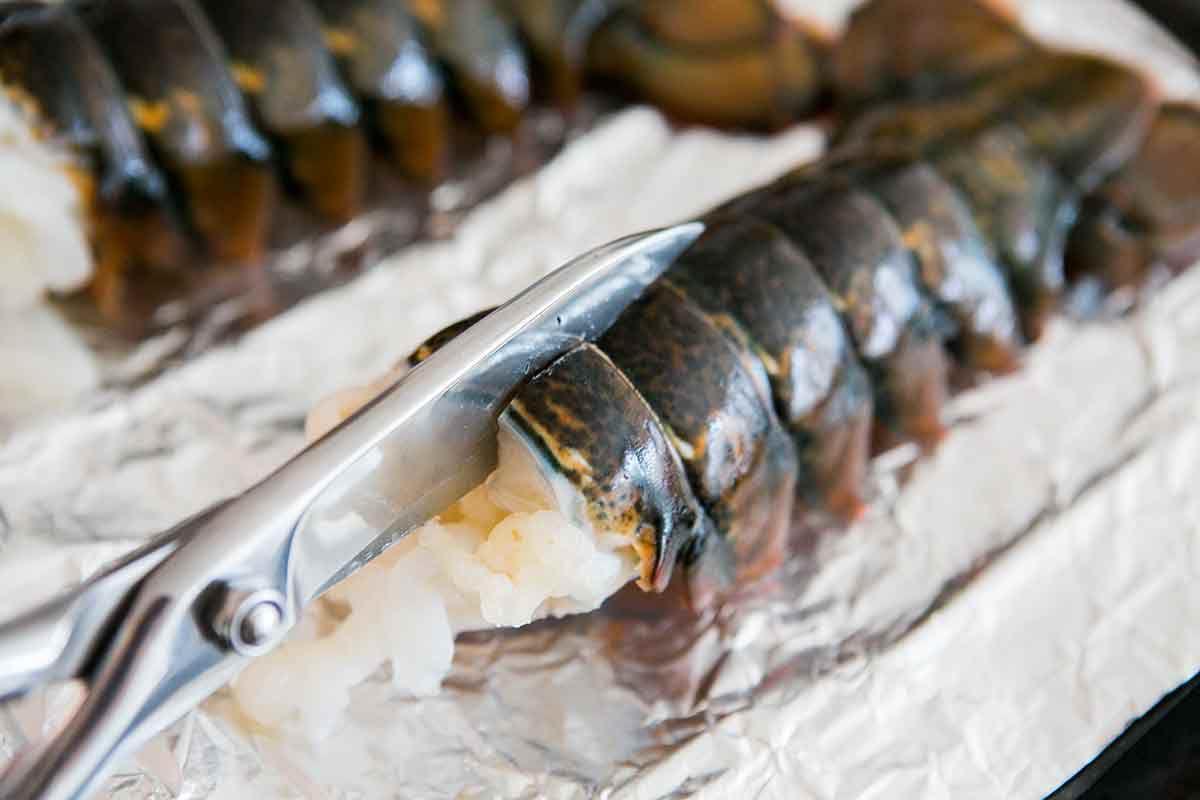 Scissors Cutting Lobster Shell