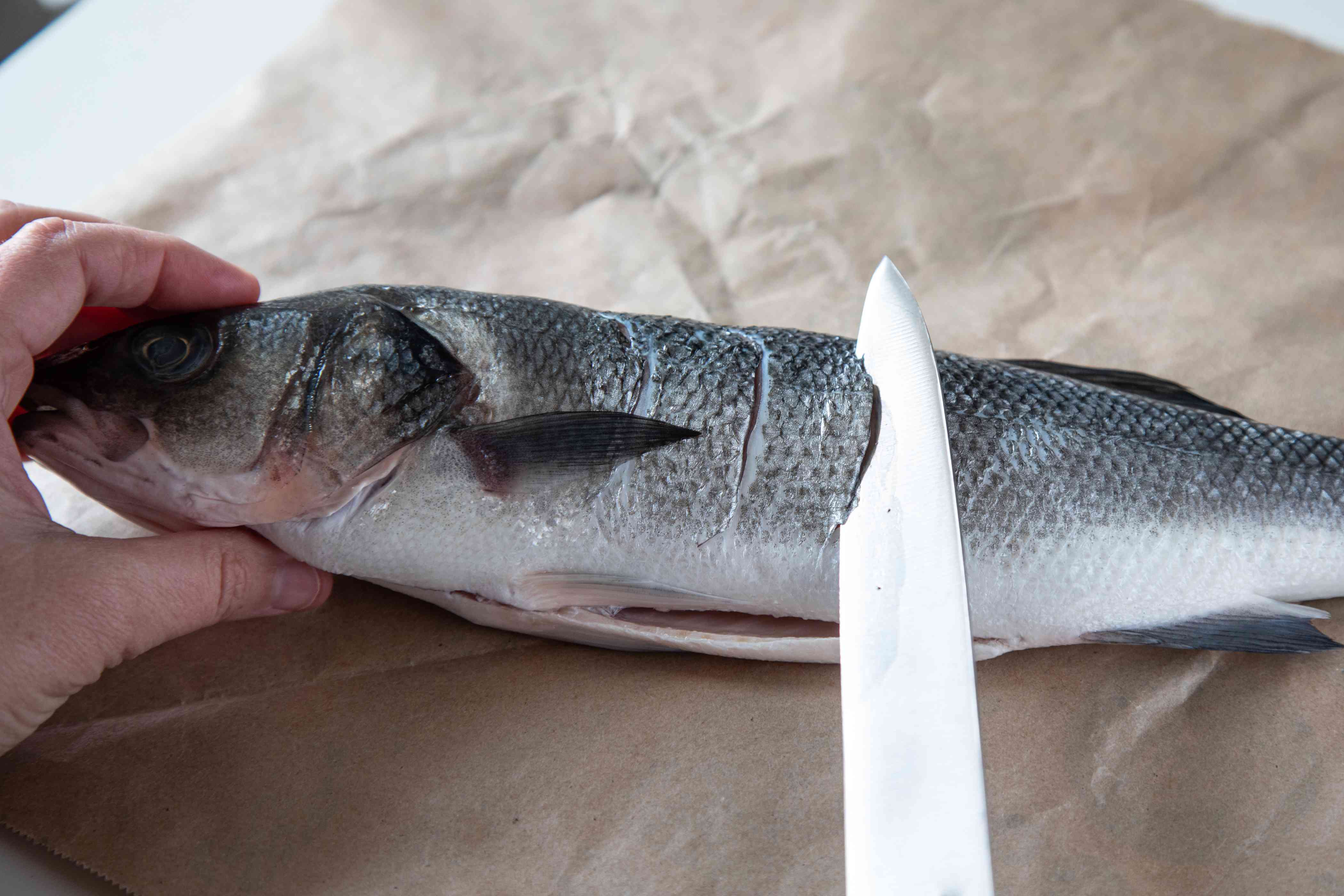 Slashing the sides of a branzini fish for a branzini recipe.