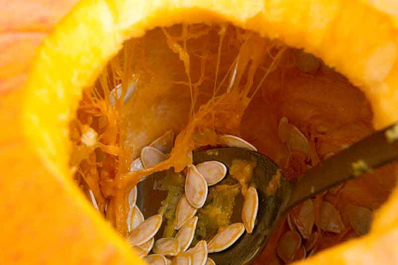 removing pumpkin seeds with spoon